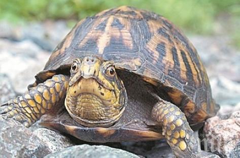 Разследват мъж, готвил костенурки в двора си