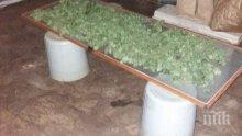 Разбиха цех за марихуана край Асеновград (СНИМКИ)