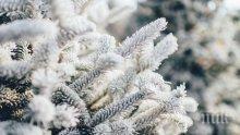 Първи сняг падна и в Силистренско