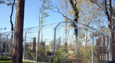 КУРИОЗ В ПЛОВДИВ: Зоопарк няма, 26 работника на щат обгрижват 6 маймуни