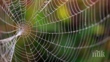 ОТКРИТИЕ: Учени разгадаха здравината на паяжината
