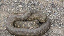 Почина рядка двуглава змия, открита във Вирджиния