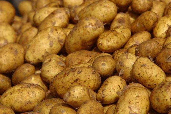 От БАБХ спряха вноса на 40 тона картофи от Полша