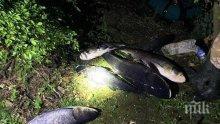 Хванаха баща и син бракониери с 80 кила толстолоб