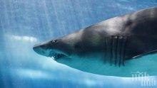 Затоплянето кара акулите да плуват на дясно