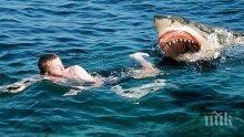 Акула нападна сърфист край бреговете на Австралия