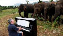 ШАШ: Слонове слушат пиано на живо