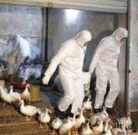 НАПАСТ: Откриха птичи грип във видинско село