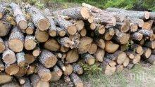 ЕКШЪН: Фрашкан с незаконна дървесина бус блъсна патрулка