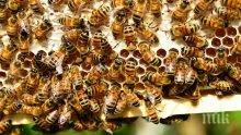 Изплащат средствата на пчеларите по държавната помощ de minimis от 4 до 28 февруари