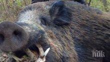 Ловци от Крумовградско заразени с трихинелоза