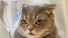 Изследване опроверга твърдението, че котките ни игнорират