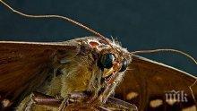 УНИКУМ: Ето как военни използват насекомите в битка