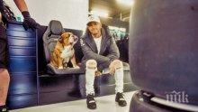 КУРИОЗ: Кучето на Люис Хамилтън само изкарва парите си (СНИМКА)