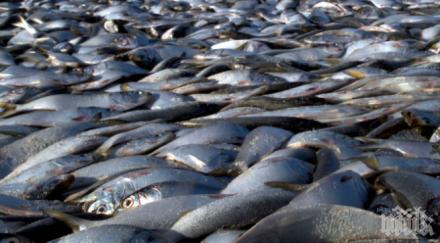 иара полиция следите бракониери напълнили чувала риба мандра