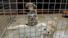 Откриха кучешки приют в Хасково