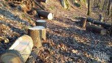 Закопчаха бракониери за незаконен добив на дървесина