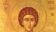 ГОЛЯМ ПРАЗНИК: Трифоновден е! Почитаме обичан светия, покровител на лозарите и винарите