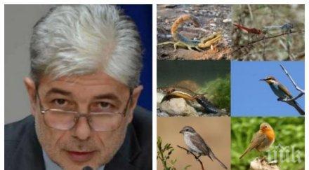 ИЗВЪНРЕДНО В ПИК TV: Министерството на Нено Димов подхваща дъвката на Зеления октопод - Емил Георгиев и Слабаков разбиха екорекетьорите за биологичното разнообразие и Натура 2000 (/ОБНОВЕНА)