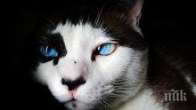 ЧУДО: Съживиха замръзнала котка