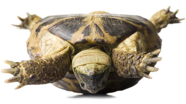 ИНСУЛИНОВА ТЕРАПИЯ: Разработиха хапче-инжекция като обърната костенурка