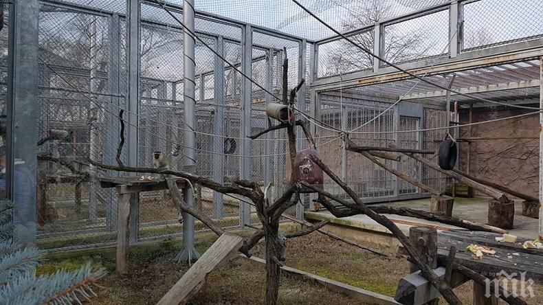 ЩЕ ГО БЪДЕ: Зоопаркът в Пловдив готов до лятото, кметът Тотев щастлив - вълкът Бисер бил жив и здрав