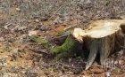 Сгащиха горски да сече наред в гората над Боровец