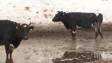 Европа харчи 20 на сто от бюджета си за животни