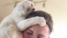 Ако котката ви прави тези 10 неща, значи ви обича истински