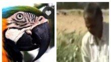 Папагали наркомани щурмуват маковите плантации в Индия