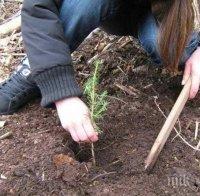 Залесиха 4 декара на мястото на изсъхнала гора край Дупница