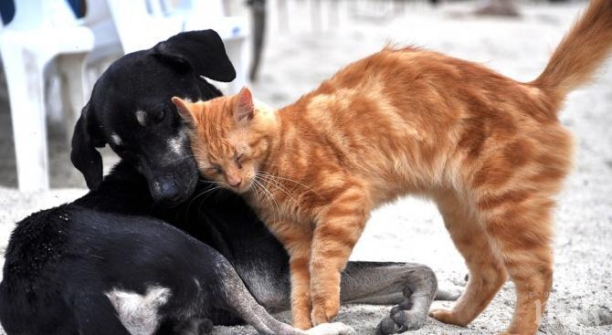 Кастрират безплатно кучета и котки в Сливен
