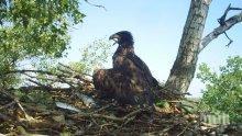 СРАМ! Световният фонд за дивата природа събира пари в България да пази горите. А веднъж не е засадил дръвче