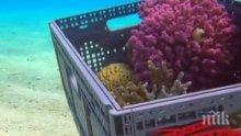 Необичайна мярка: Местят 50-годишни корали в Израел. Ето защо