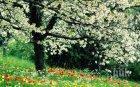 ВНИМАНИЕ: Пролетта събужда цистита