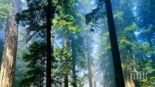 Отбелязваме Световния ден на гората