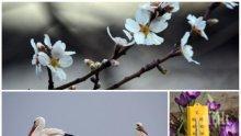 ТОПЛОТО ПРОДЪЛЖАВА: Мартенската пролет ще бъде в разгара си, температурите ще стигнат до 21 градуса