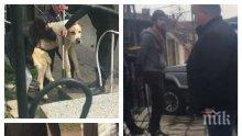 """САМО В ПИК: Вижте пернишкия садист, умъртвил 14 кучета от елитната порода алабай и """"наказан"""" с 14 месеца пробация (ВИДЕО/СНИМКИ 18+)"""