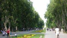Засадиха нови дървета в Морската градина във Варна