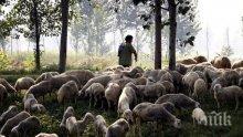 Ограниченията за продажба на животни в Ямболско остават