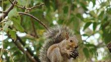 В РУСЕ: Спасиха катерички бебета, паднали от отсечено дърво (УНИКАЛНИ СНИМКИ)