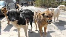 ЛУДА РАБОТА: Мъж подлуди съседите си с 52 котки и дузина кучета