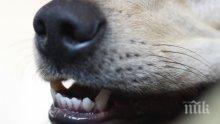 ЗЛОВЕЩО: Домашно куче нахапа жестоко тригодишно детенце