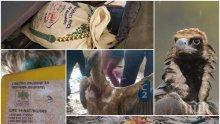 ШАШ: Български лешояд задържан за... шпионаж в Йемен