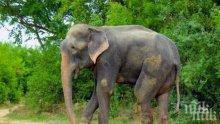 Слон стъпка петима души в Индия
