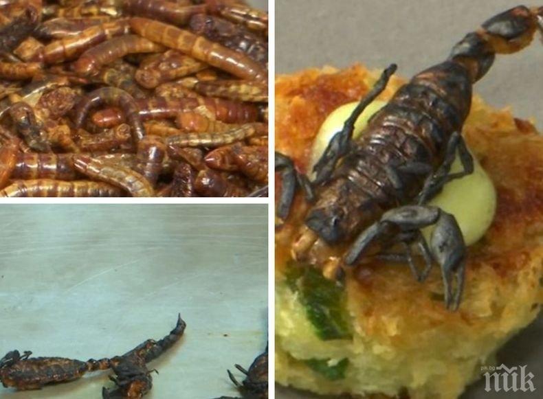 Храната на бъдещето: Защо е полезно и екологично да ядем насекоми?