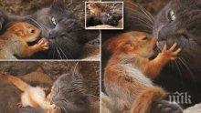 НЕОБИЧАЙНО: Котка осинови осиротели катерички (ВИДЕО)