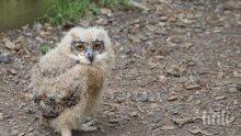 Експерти от РИОСВ-Пловдив спасиха новоизлюпена сова