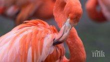12 пиленца фламинго се излюпиха във Виена (ВИДЕО)