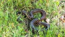 ПАНИКА В КОЗЛОДУЙ: Змии плъзнаха из парка на Дигата